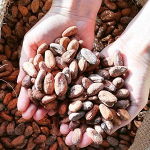 Whole Cacao Beans