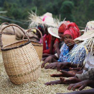Café de África