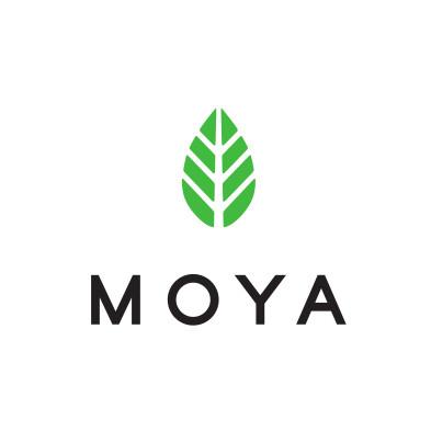Moya Matcha Té