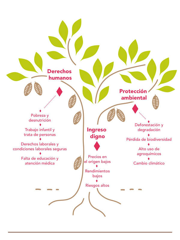 Reflexion Dia Internacional del Cacao