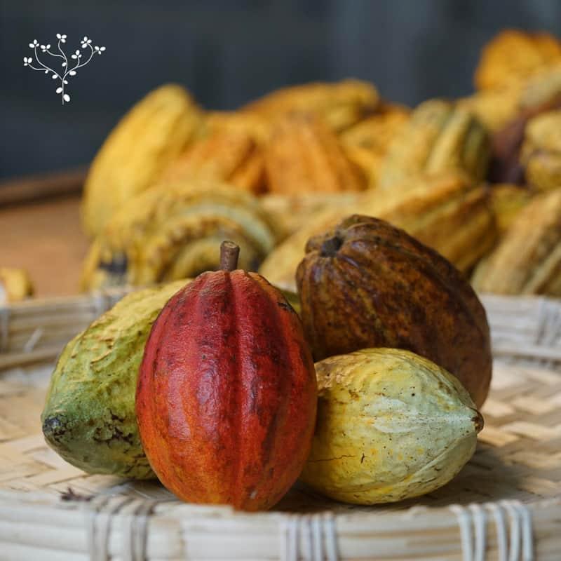 Blog Reflexion dia internacional del cacao