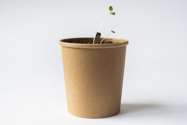 Plant Rho Eco