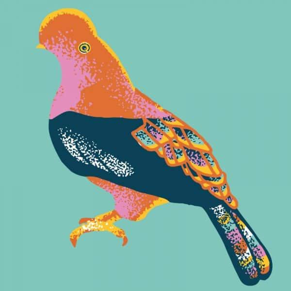 COLOMBIA-HONEY-BIRD