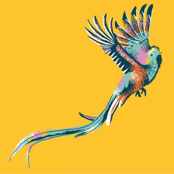 Resplendent-Quetzal-CENTRA-AMERICAN-bird